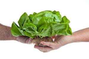 Lettuce & Hands